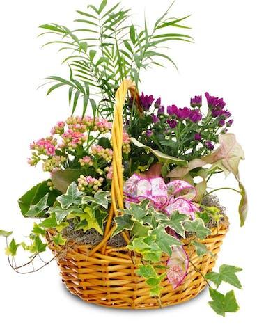 An assortment of plants in a woven handbasket.