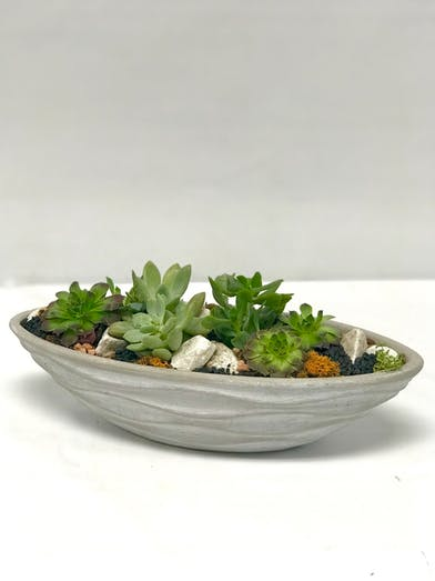 A variety of succulents in a stone dish container.