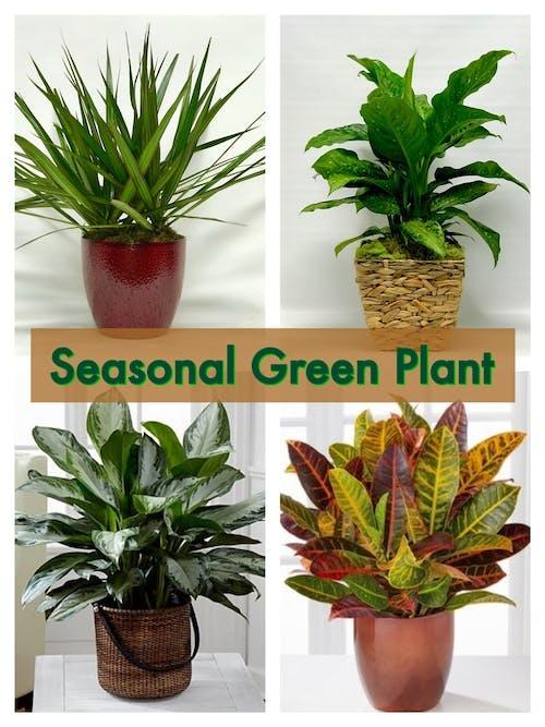 Seasonal Green Plant
