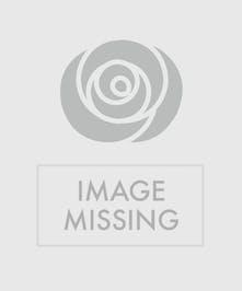 Bromeliad plant in a dark planter.