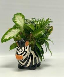 Lil Zeb - Tulsa Florist - mary Murray's Flowers - Tulsa, Oklahoma (OK)