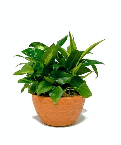 Assorted green plants in a ceramic container.