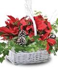 Poinsettia Euro garden Basket