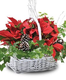Double Poinsettia Basket - Mary Murray's Flowers