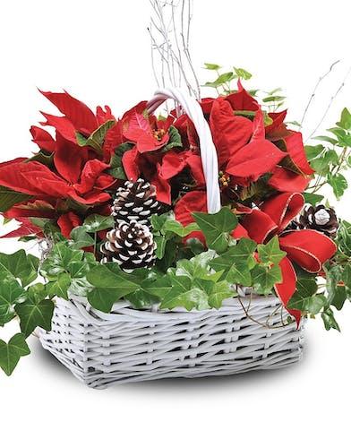 Double Poinsettia Basket - Mary Murray's Flowers
