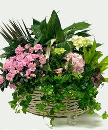 Blooming flowers and a green plant in a lovely basket.