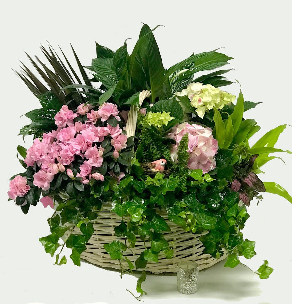 The english garden blooming plants flowers tulsa florist blooming flowers and a green plant in a lovely basket izmirmasajfo