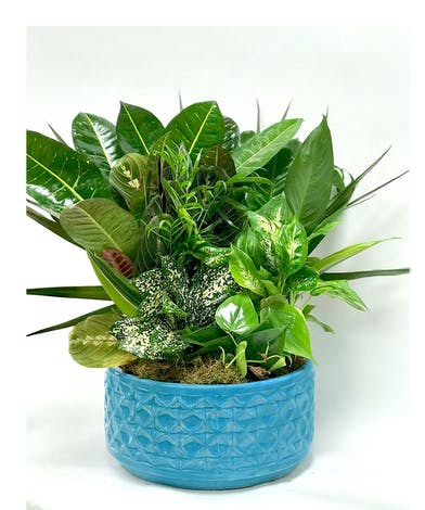 Assorted plants in a blue ceramic container.