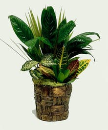 Banana Leaf Planter