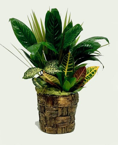 Assortment of green plants in a hand woven banana leaf basket.