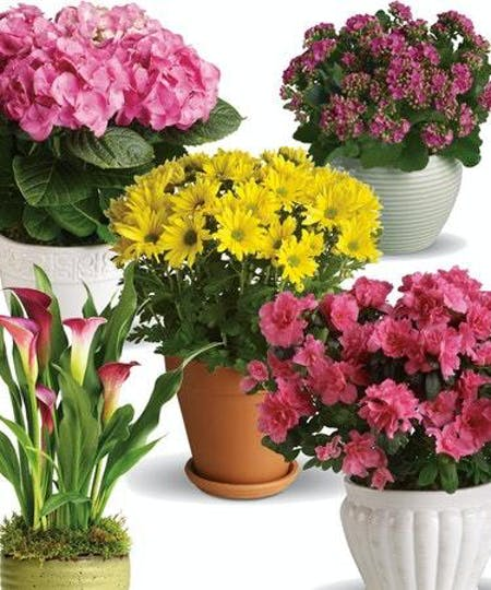 Blooming Plants